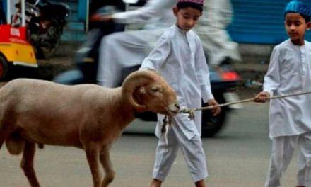 3 Keutamaan Berkurban di Hari Raya Iduladha Menurut Al-Qur'an dan Hadis